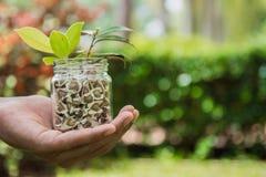 Handinnehavfrö och plantor i kruset Ekologifruktkonservbegrepp Royaltyfri Foto