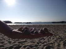 Handinnehavskal, strandbakgrund royaltyfria foton