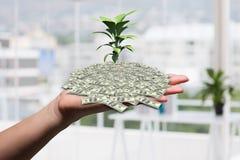 handinnehavväxt som växer från pengarbunt Royaltyfri Foto