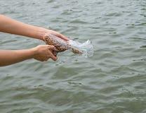Handkvinnor som matar fiskkulor Fotografering för Bildbyråer