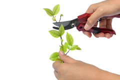 Handle cut branches Stock Photos