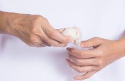 Handle garlics. royalty free stock photography