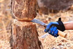 Handle a knife to cut  trees Stock Photo