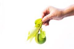 Handle lime green Stock Photo