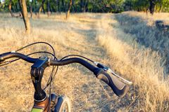 Handlebar  of the bicycle on the off-road, dry autumn grass and forest Royalty Free Stock Photos