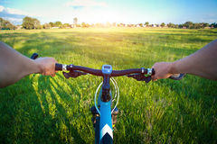 Handlebars with hands of a bicyclist. In the field Stock Photos