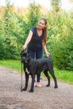 Handler with a dog Cane Corso Italian Mastiff Royalty Free Stock Photo