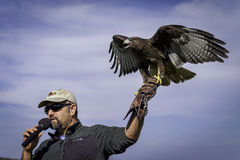Handler Holding Red Tailed Hawk, California Stock Image