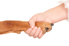 Handling of the dog and man Stock Image