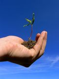 Handling Growth. A plant spiring in your hand Royalty Free Stock Photography