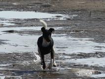 Handling i vattnet Arkivbild