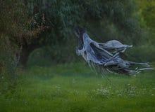 Handmade śmierć lata przez powietrza z falistą salopą w las nad gazon z zieloną trawą Jesieni lato fotografia stock