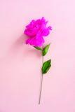 Handmade бумажный цветок стоковая фотография