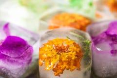 Handmade кубы льда с вызреванием замороженного курорта красоты заботы кожи цветков заводов трав лицевого анти- Стоковые Изображения RF