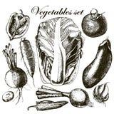 Handmade работа - установленные овощи вектор Иллюстрация штока
