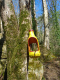 Handmade bird feeder in the woods. Bird feeder on mossy tree in sunny forest, Caucasus Nature reserve Stock Photography
