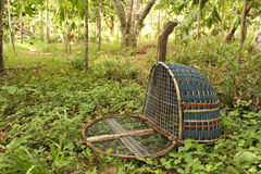 Handmade bird trap. (bird name a water rail of the genera Rallus and Amauropsis) in rubber tree garden at the southern part of Thailand Royalty Free Stock Photo