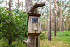 Handmade birdtable in a wood Stock Photography