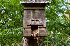 Handmade birdtable in a wood Royalty Free Stock Images