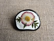 Handmade brooch from dried pressed  flower Stock Image