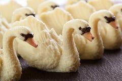 Handmade chocolates swan Stock Images