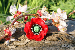 Handmade clay poppy ring with apricot blossom Stock Image