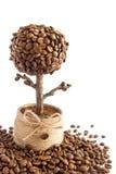 Handmade coffee tree Royalty Free Stock Image