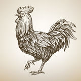 Handmade drawing Rooster Royalty Free Stock Images