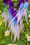 Handmade dream catcher with feathers threads and beads rope hanging. Dream catcher with feathers threads and beads rope hanging. Dreamcatcher handmade, dream royalty free stock photo