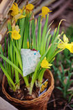 Handmade fabric chicken in pot of narcissus in spring garden Royalty Free Stock Photos