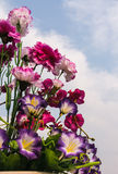 Handmade flower on sky background. Handmade flower on blue sky background Royalty Free Stock Photo