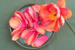 Crepe paper peony flowers Stock Photo