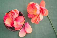 Crepe paper peony flowers Royalty Free Stock Image