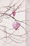 Handmade hearts hanging on the branch. Couple of handmade romantic hearts hanging on the branch Stock Photos
