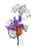 Handmade iris illustration. Black and silver outline on purple and orange watercolor splash, 3d effect.  on white background. Fabric texture. Template for Royalty Free Stock Image