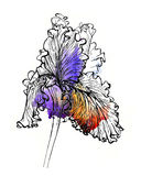 Handmade iris illustration. Black and silver outline on vibrant purple and orange watercolor splash, 3d effect. Isolated on white background. Fabric texture Stock Image