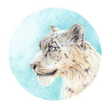 Handmade painting colored pencils snow leopard head Royalty Free Stock Photos