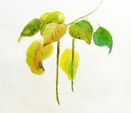 Handmade painting of leaves Stock Image