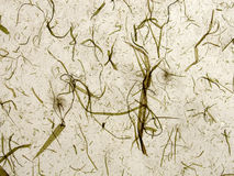 Handmade paper beige. Translucent handmade grainy paper with grass on beige Stock Photography