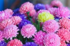 Handmade paper flowers Royalty Free Stock Image