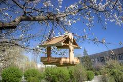 Handmade ptasi dozownik na kwitnąć owocowego drzewa Zdjęcia Royalty Free