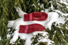 Handmade red mittens on the snow on the tree stock photos