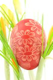 Handmade scratched Easter egg among crocus flowers Royalty Free Stock Images