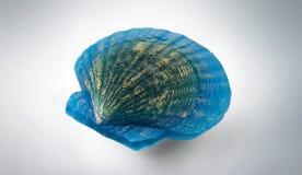 Handmade Soap Shell Stock Photos