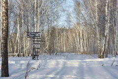 Handmade tower for hunting in birch forest. snow, sunny day, Russia, Siberia, Russian native Royalty Free Stock Photography