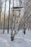 Handmade tower for hunting in birch forest. snow, sunny day, Russia, Siberia, Russian native Stock Image