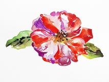 Handmade watercolor rose on white paper vector illustration