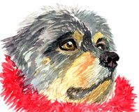 Handmade watercolor Tibetan Mastiff in red tinsel Stock Photo