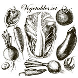 Handmade work - set vegetables. Vector. Royalty Free Stock Photos