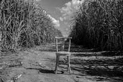 Handmaid wooden chair in the middle of a dirt road crossing a sugar cane plantation, clouds in the background. Black and white pic royalty free stock image